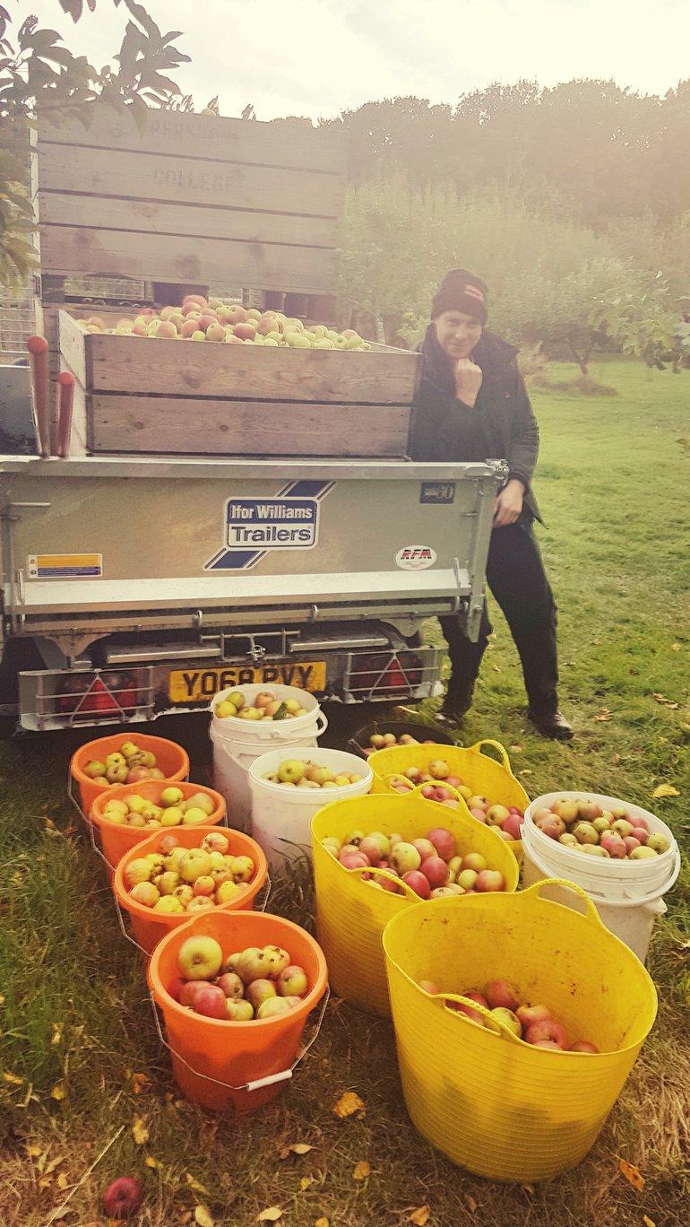 AHC apple picking Seamus