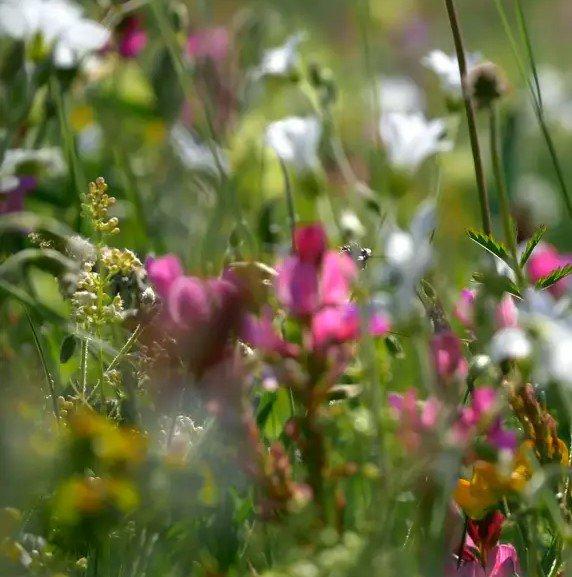 Flower meditation image.jpg