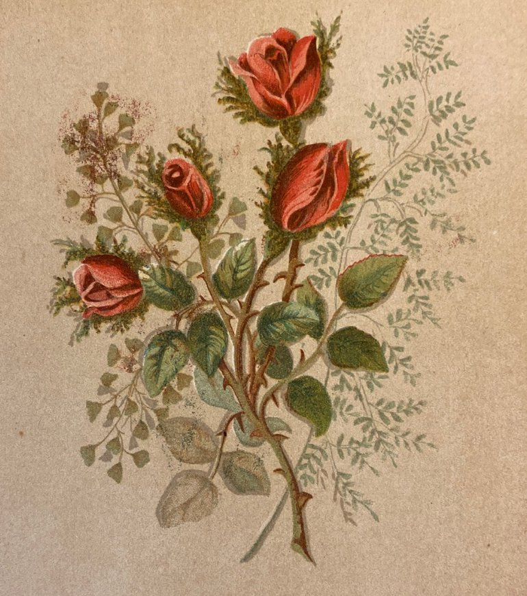 Flowers of Shakespeare King Richard VIOLA_pagejpegROSES.jpg