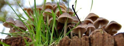 Fungi at MAF