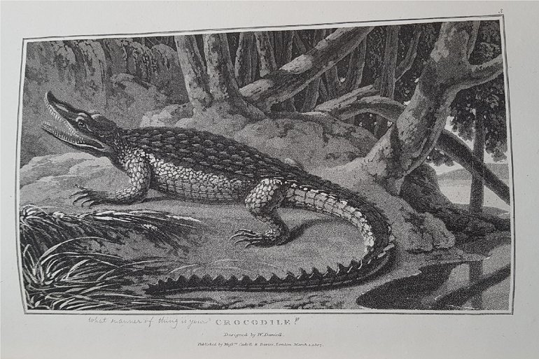 George Williams Nile Crocodile