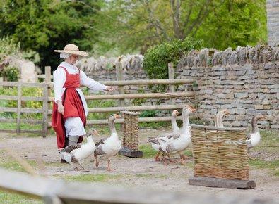 Tudor goose herding