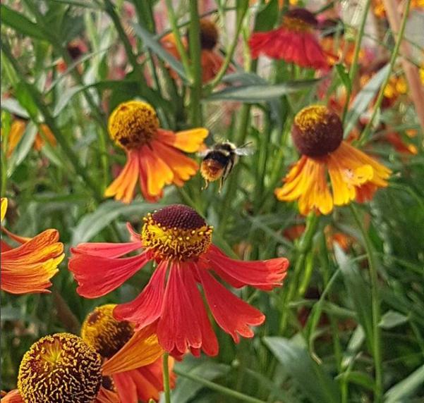 Mary Arden Bee 2