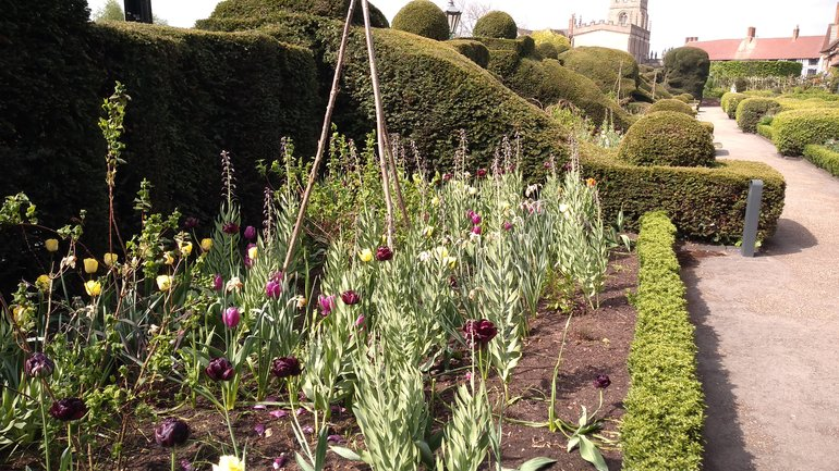 NP Borders planting - during