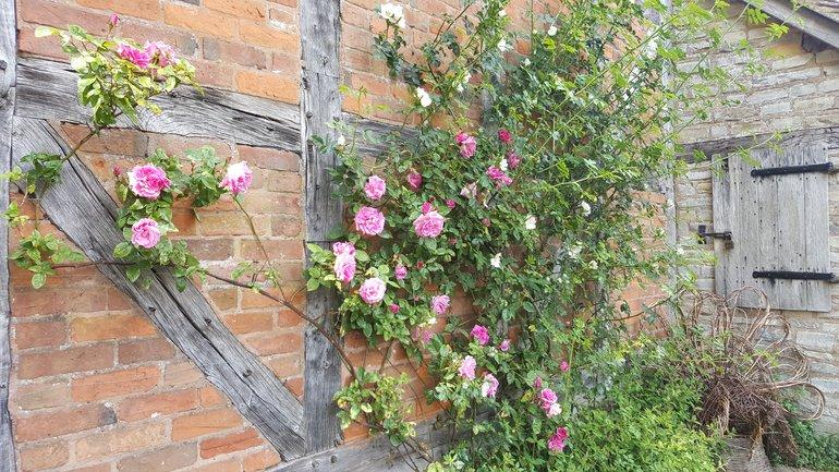 Scented rose petals