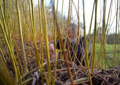 Willow Weaving at Mary Arden's Farm