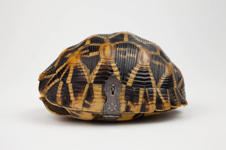 SBT 2006-34 Tortoise shell box