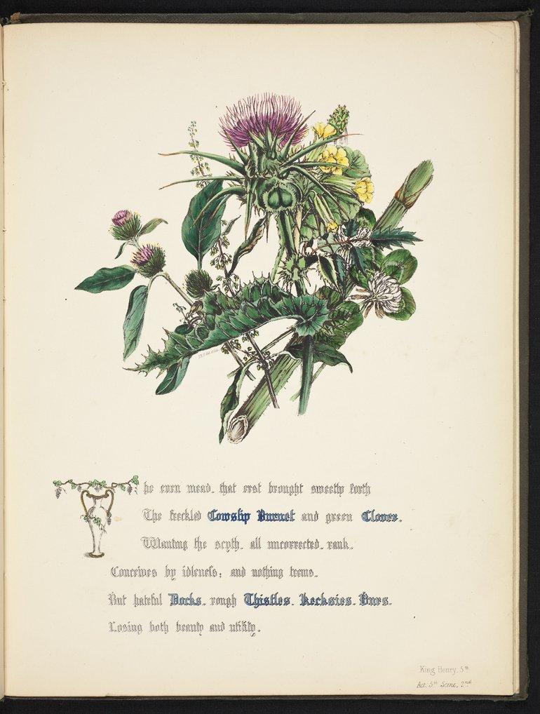 sbt-os-56-83039953-flowers-of-shakespeare-1845-plate-27 THISTLE.jpg