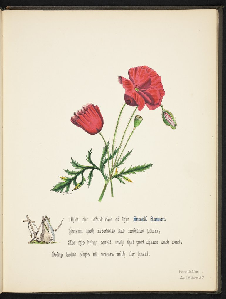 sbt-os-56-83039953-flowers-of-shakespeare-1845-plate-22.jpg